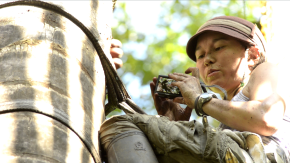 Chelsie Romulo - Working to conserve and sustainably manage the ecologically, culturally, and economically important palm tree Mauritia flexuosa (aguaje) in the Peruvian Amazon