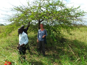 Sarina Veldman - Collection medicinal plants in the field, Pwani region, Tanzania