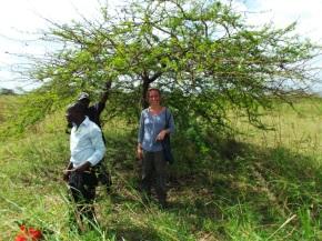Sarina Veldman - Collection medicinal plants in the field, Pwani region, Tanzania