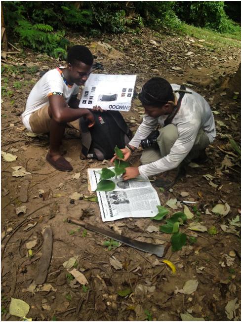 Preparation of herbarium specimens.jpg