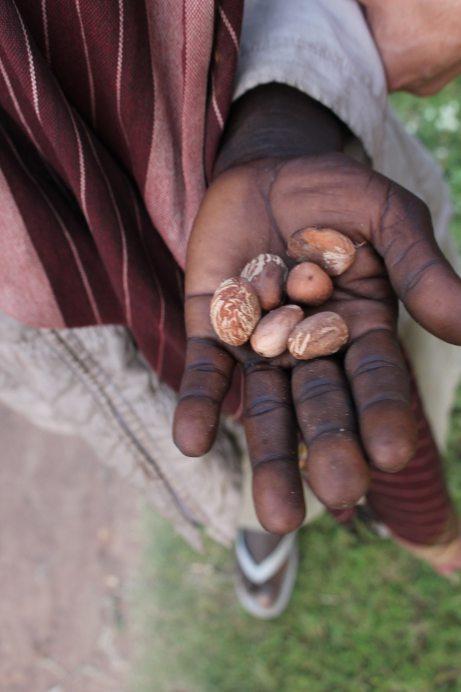 shea-butter-vitellaria-paradoxa-producer-under-in-a-small-village-in-west-nile-uganda-photo-by-cory-w-whitney